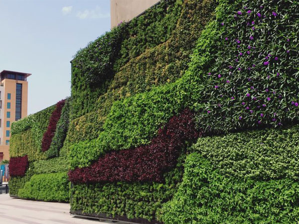 Vertical Gardens / Green Wall